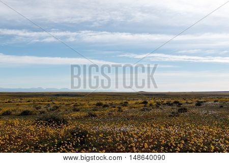 Perfectly Flat Huge Open Empty Green Landscape In Tankwa Karoo