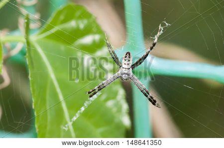Close up of white strange spider on spider web