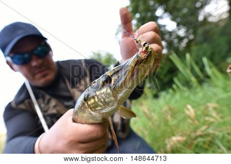 Closeup of pike caught by fisherman