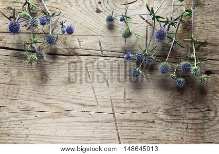 Wild Thistles, Thorns On Wooden Background