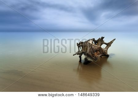 old log in the water / beach is a wild beach early spring Ukraine