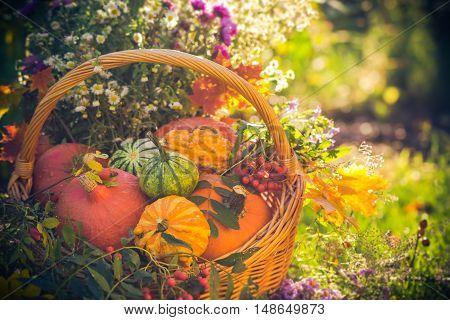 Colorful Pumpkins Basket Autumn Garden