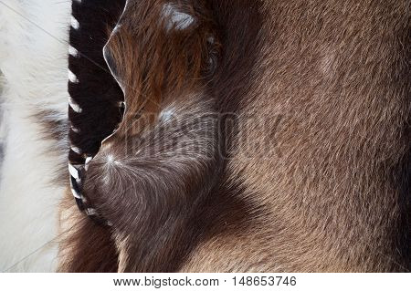 Close Up Of Cow's Skinned  Genuine Natural Furs