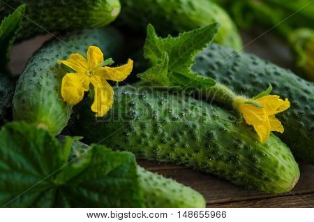 Harvest cucumbers with flowers on the wooden background