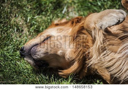 funny dog is joking in the field