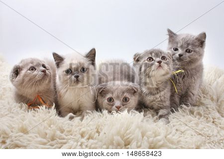 Group Kitties On White Background