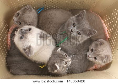 Kittens In A Bag For Transport To A White Background.