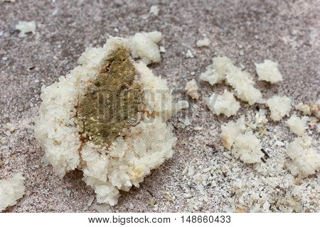 Fungus on rancid rice on the concrete background