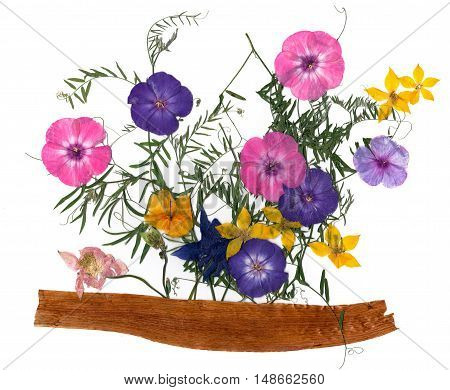 application a bouquet of dried pressing bright flowers and small delicate sweet peas yellow celandine multicolor royal Aquilegia Columbine flower long stiff brown iris leaves