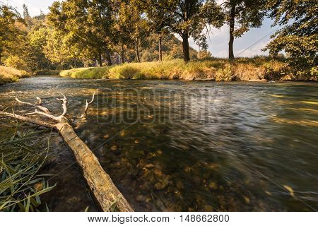 Tree trunk fell into the water. Moravian landscape Lhota Rapotina.