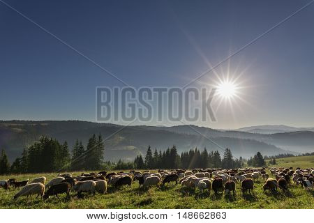 Livestock On Pasture High In The Hills.