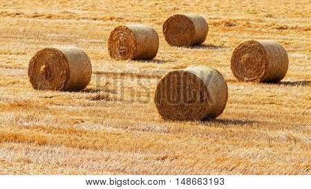 Haystacks Straw Left After Harvesting Wheat, Shallow Depth Of Field