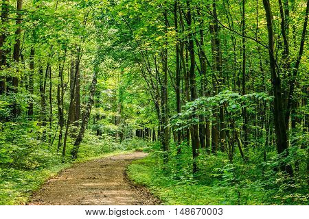 Beautiful Countryside Sandy Road Lane Path Way Through Summer Deciduous Forest Woods. Nobody