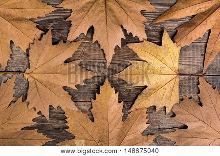 Maple leaves on the wooden background. Autumn composition