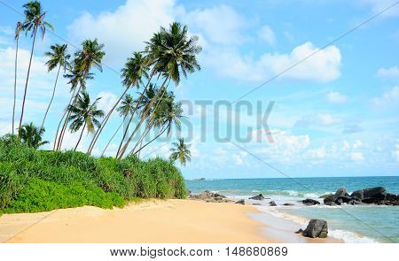 Untouched tropical beach in Sri Lanka, blue sky and palm trees