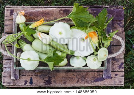 Full Wooden Box Of Courgettes And Squashes