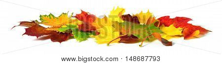 Fallen down autumn leaves in vivid colors studio isolated on white background