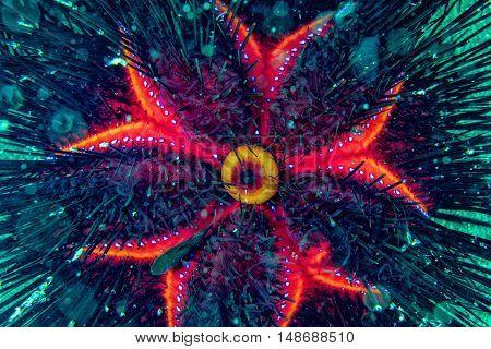 sea urchin close up portrait underwater macro
