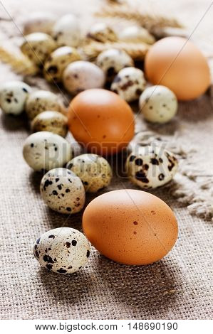 Speckled quail eggs and chicken eggs on a rustic background.