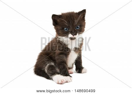 black and white kitten isolated on white background