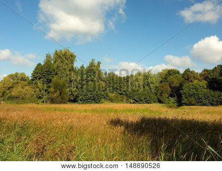 Beautiful autumn landscape meadow at the beginning of September with lush colorful flora and under blue sky with white clouds.Interesting postcard illustration. Horizontal view.