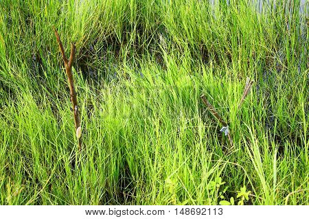 Grass takes place above the surface of the lake.