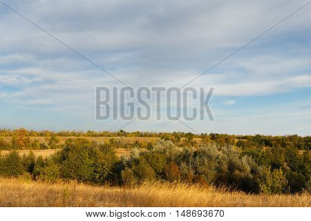 Autumn landscape of the forest at sunset