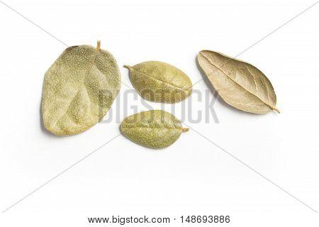 Brazilian Boldo Leaves. Close-up Photo isolated in white background
