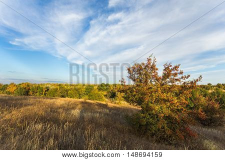 Fall landscape at sunset under blue sky