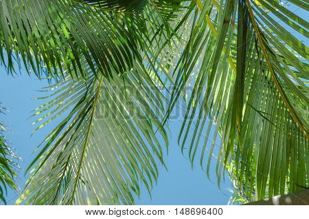 Palm leafs at sunny day in Australia.