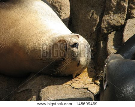Looking up close and personal with a sea lion.