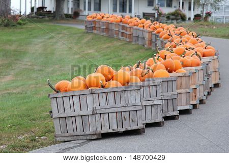 wooden crates of fall pumpkins lining the driveway