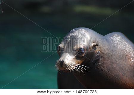 Adorable face of a really cute sea lion.