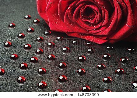 Rose on a background of red drops