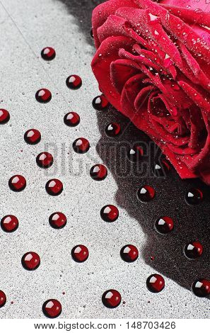 Red rose on a background of red drops closeup