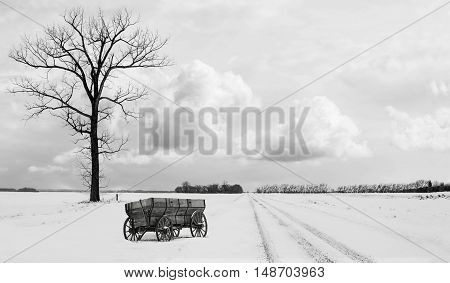 horizontal black and white image of a single tall tree sitting along side a snowy gravel road with an old wood chuck wagon sitting beside it in the winter time