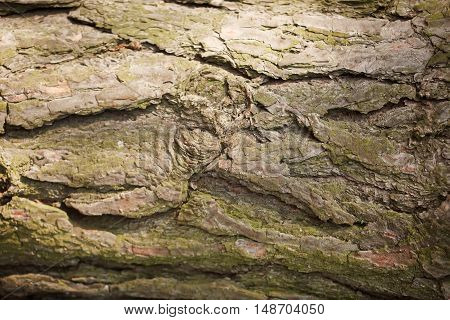 Photo of a tree bark texture. Nature wood background.