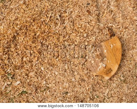 Sawdust Of Dry Alder Wood With Pieces Of Dry Brown Bark On Ground.