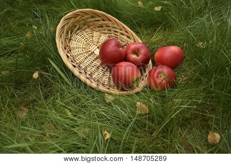 Apples lie on a plate. They grow to a garden. Apples large, red