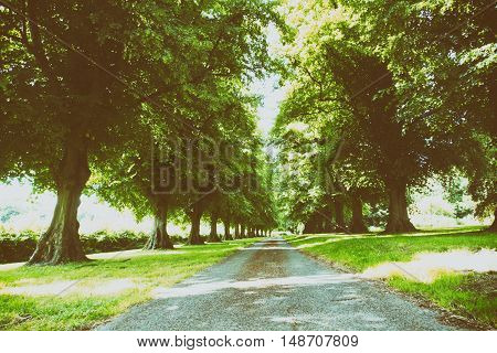 Path Surrounded By Trees On Both Sides