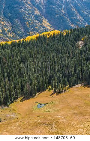 Golden Aspen Forest with Rocky Mountain in the San Juan Forest in Colorado with lake