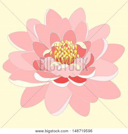 Pink Lotus Flower Close Up. Vector Illustration