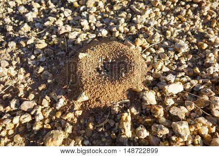 Dark brown ant mound with clay walls surrounded by small rocks; shallow depth of field