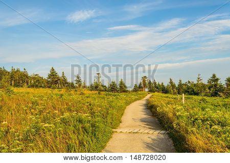 Skyline Trail Path (French Mountain Cape Breton Nova Scotia Canada)