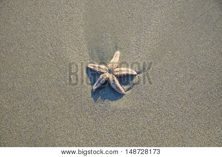 Coast beach sand surface background. Starfish on the natural environment