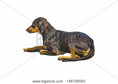 Side view of orange and black color dog sitting isolated on white background