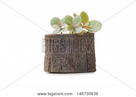 nobody wood vase isolated on white background