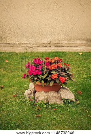 Colorful flowers in ceramic decorative vintage pot on green lawn at garden, toned