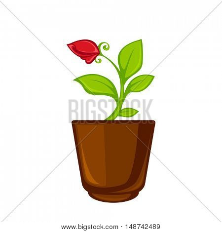 Pot room plant with flower and leave . Vector illustration. Isolated on white.