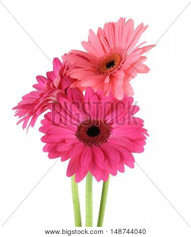 Pink flowers, isolated on white